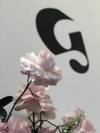 Rose & Branding
